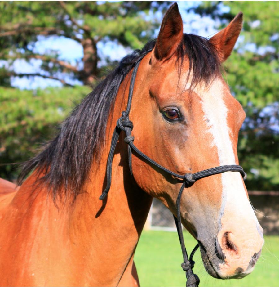 Sunny - Pony