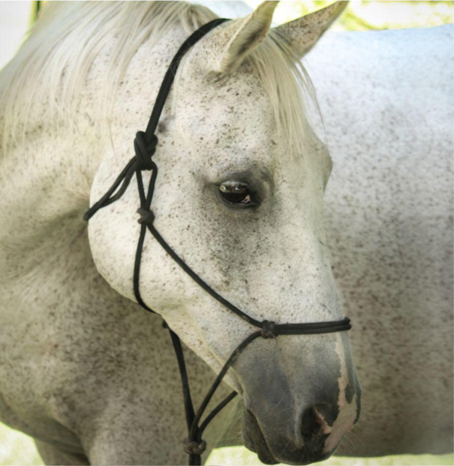 Zahla - Pony